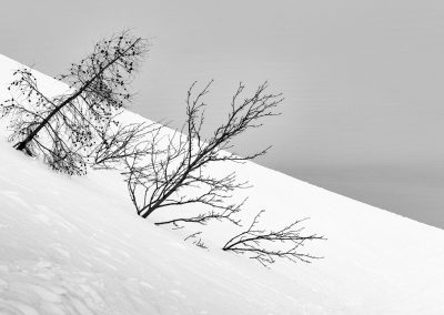 abstract image of trees in snow