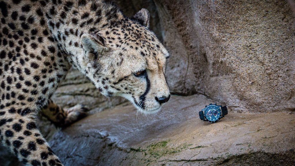 cheetah and a watch