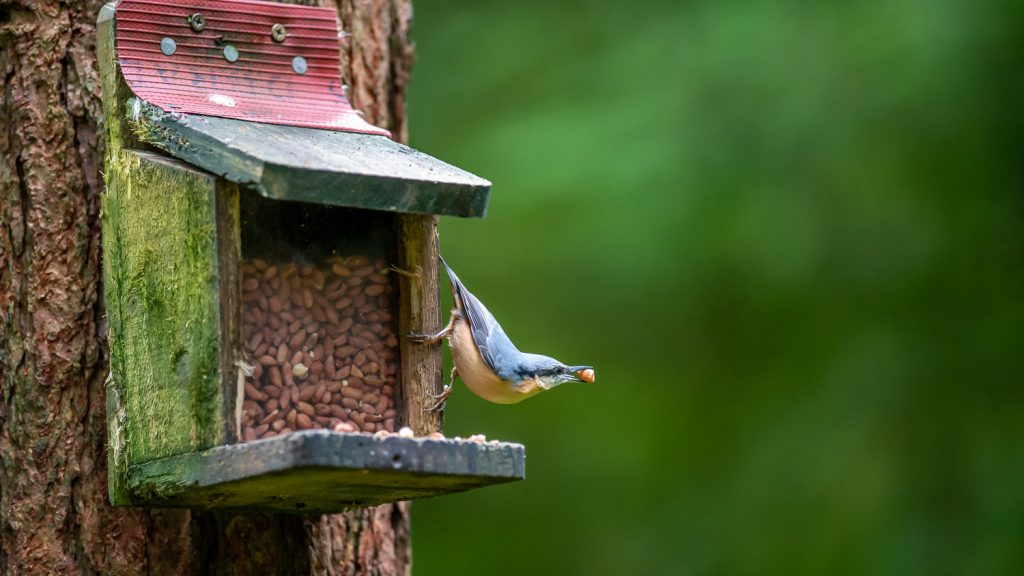 Wildlife feeding station in Aberfoyle